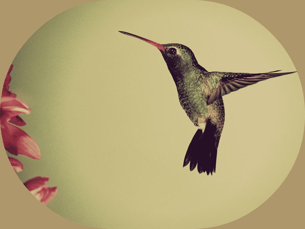 Google's hummingbird non-technical explanation