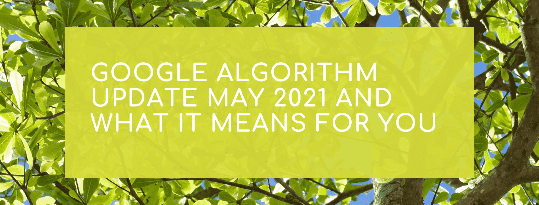 Google Algorithm Update May 2021 and what it means for you